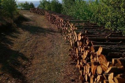 Milli parktan ağaçları kesip kütük yaptılar