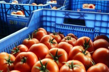 Neredeyse giden her domates geri gönderiliyor