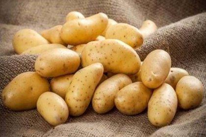 Patates üreticileri hükümete tepkili: Mazot, tohum, gübre fiyatları uçtu. Bu zamları kaldıramıyoruz