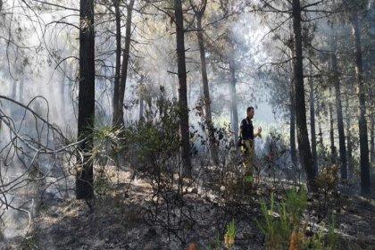 Pendik Aydos ormanlarında yangın