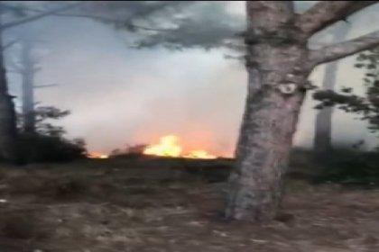 Sultangazi Kent Ormanı'nda yangın
