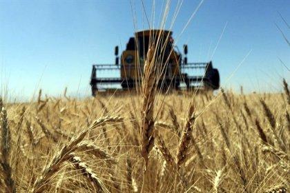 Tarım ürünlerine sınırsız ithalat yolda