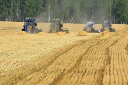 TMO'ya sıfır gümrükle 1.5 milyon ton buğday ithalat yetkisi