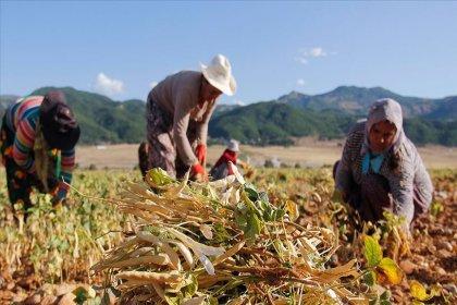 Türkiye'de tarım alanının yüzde 15'i ipotek altında