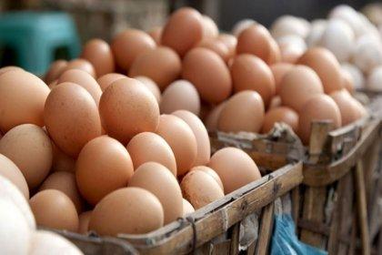 TZOB: Yumurtada ihracat sıkıntısı çözülmeli