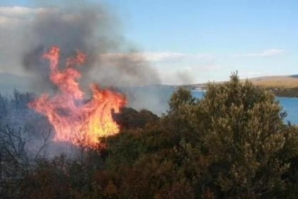 Urla'da orman yangını: 1 makilik alan kül oldu