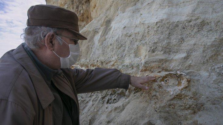 Edirne'de köylüler mamut fosili buldular