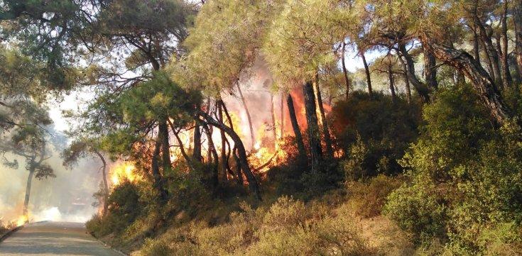 Heybeliada'da ki yangın kontrol altına alındı; şüpheli 3 kişi gözaltında