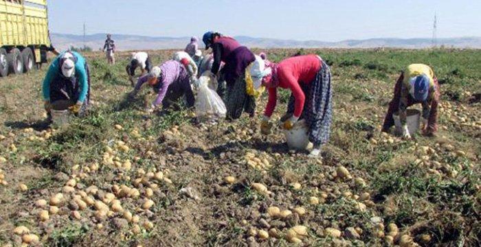 'Soğan, patates ve limon üreticisi sıkıntıda'