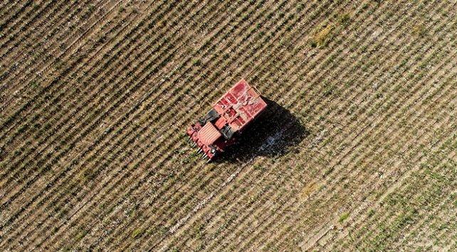 Tarım ve Orman Bakanlığı duyurdu: Tohumların yüzde 75'i, 21 ildeki üreticilere hibe edilecek