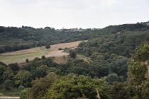 Danıştay, 180 bin ağacı kurtardı
