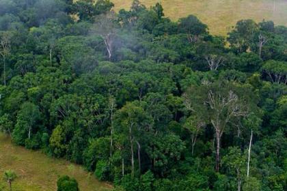1990'dan bu yana 178 milyon hektar orman yok oldu