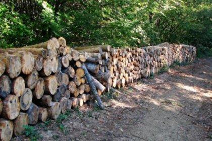 5 yılda 115 milyon metreküp odunluk ağaç kesildi