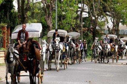 Adalar'daki fayton ve atları İstanbul Büyükşehir Belediyesi satın alıyor