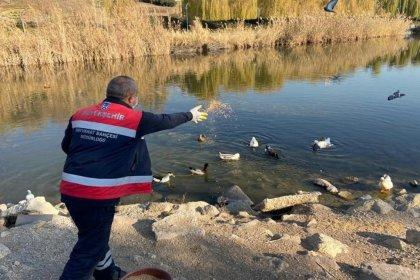 Ankara Büyükşehir Belediyesi sokak hayvanları için 28 ton mama dağıttı