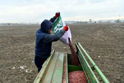 Ankara Büyükşehir Belediyesi'nden 4 bin 219 çiftçiye tohum desteği
