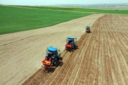Ankara Büyükşehir Belediyesi'ne ait tarım arazilerine üretim başladı; hasat sonrası ürünler toplanarak, ihtiyaç sahibi vatandaşlara ücretsiz dağıtılacak