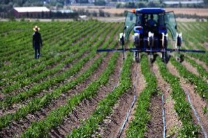 Ankara Büyükşehir Belediyesi'ne ait tarım arazilerinde hasat için geri sayım başladı
