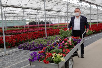 Antalya Büyükşehir Belediyesi, üreticiden aldığı çiçekleri Anneler Günü'nde hediye edecek