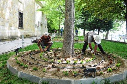 Avanos Belediyesi mevsimlik çiçek dikimine başladı