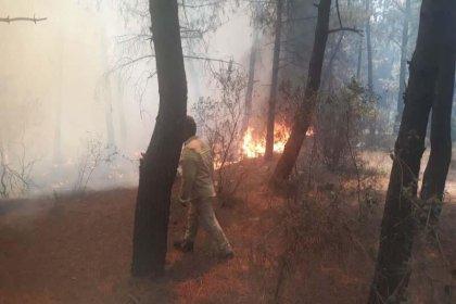 Aydos'ta ormanlık alanda yangın