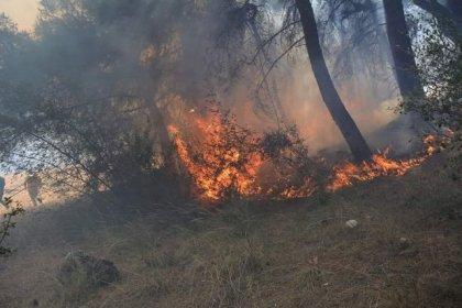 Bakan Pakdemirli'den orman yangınlarına ilişkin açıklama
