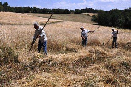 'Bir ton buğday üretip satan çiftçi, 2002 yılında 33 gr altın alırken 2020 yılında 4 gram alabiliyor'