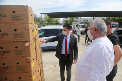 Bodrum Belediyesi üreticilere 65 bin fide dağıttı