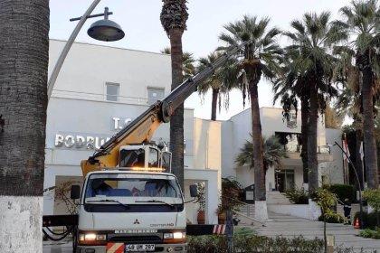 Bodrum'da palmiye ağaçlarına kışlık bakım başladı
