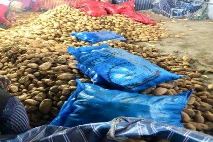 Depoda tonlarca patates dururken, Mısır'dan patates ithal edildi