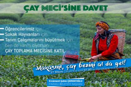 Fındıklı Belediye Başkanı Çervatoğlu'ndan çay hasadına çağrı