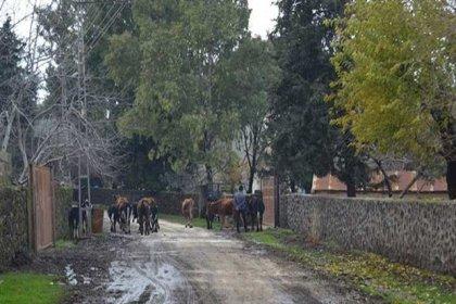 Gaziantep'te bir mahalle kuduz nedeniyle 6 ay süreyle karantina altına alındı