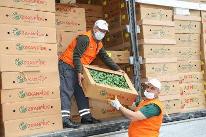 İBB, çiftçiye 3,5 milyon ücretsiz sebze fidesi dağıttı