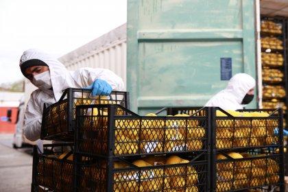 İBB tarafından ihtiyaç sahiplerine ücretsiz dağıtılacak 100 ton limon İstanbul'a geldi