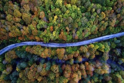 Istranca ormanlarında on binlere ağaç kesilecek