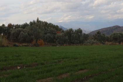İzmir Büyükşehir Belediyesi, iklim dostu yem bitkileriyle su kaynaklarının verimli kullanılmasını sağlayacak