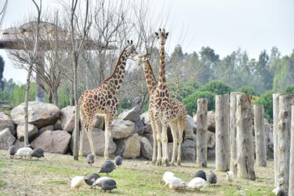 İzmir'de Doğal Yaşam Parkı yeniden açılıyor