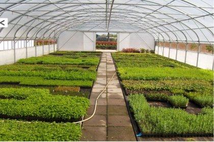 İzmit Belediyesi sera kuruyor: Kent içi süslemeler belediyenin serasındaki çiçek ve bitkilerle yapılacak