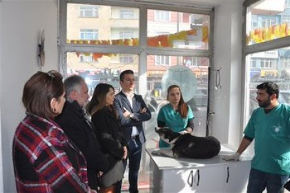 Kars'ta sokak hayvanlarının kısırlaştırılması ve aşılanması işlemi başladı