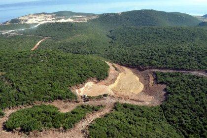Sakarya'da kalker ocağı projesi için 1500 ağaç kesilecek