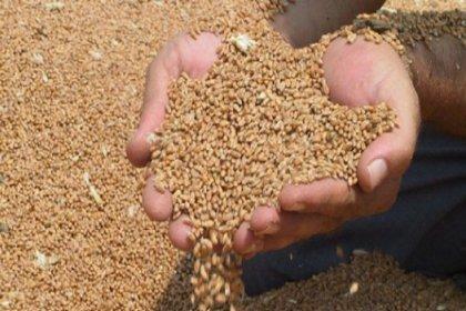 'Tohumculuk pazarının yüzde 70'i yabancı firmalara aittir'