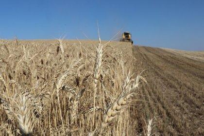 Türkiye'nin tarımı böyle çöktü: Yerli çiftçiye bin 850 TL, Meksika'daki çiftçiye 2 bin 350 TL ödenmiş