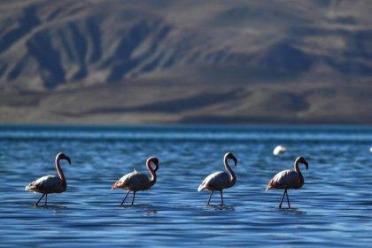 Van Gölü Havzası'nın narin kuşları flamingolar Afrika'ya göç ediyor