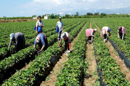 Ziraat Mühendisleri Odası: Pansuman önlemlerle tarım sektörünün kalıcı sorunları çözülemez