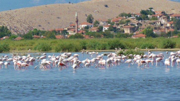 Bafa Gölü 261 farklı kuş türüne ev sahipliği yapıyor