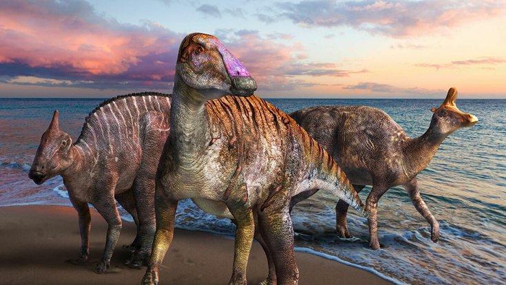 Dinozorları yok eden asteroidin oluşturduğu dev tsunaminin dalgaları, 66 milyon yıl sonra ilk kez 'görüntülendi'