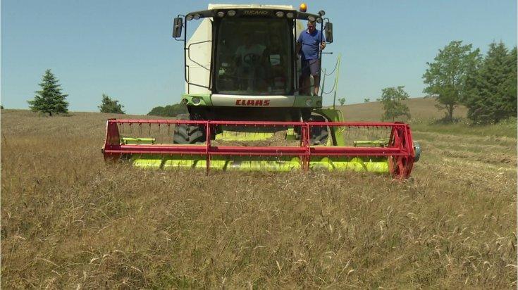 İstanbul Büyükşehir Belediyesi, boş duran arazilere ektiği buğdayın ilk hasadını yaptı