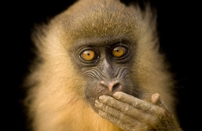 National Geographic sergisi 'Photo Ark' çevrimiçi ziyarete açıldı