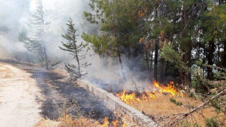 Orman yangınları sonrası bilgi kirliliği nedeniyle Akademisyenler 2019'da 'Ormanın Çağrısı' bildirisi yayınlamış