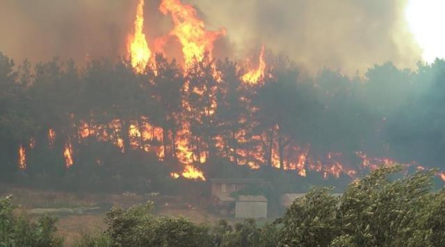 Uzmanlar uyardı: Bu yıl 194 bin hektar orman yandı, önümüzdeki dönem daha da artacak